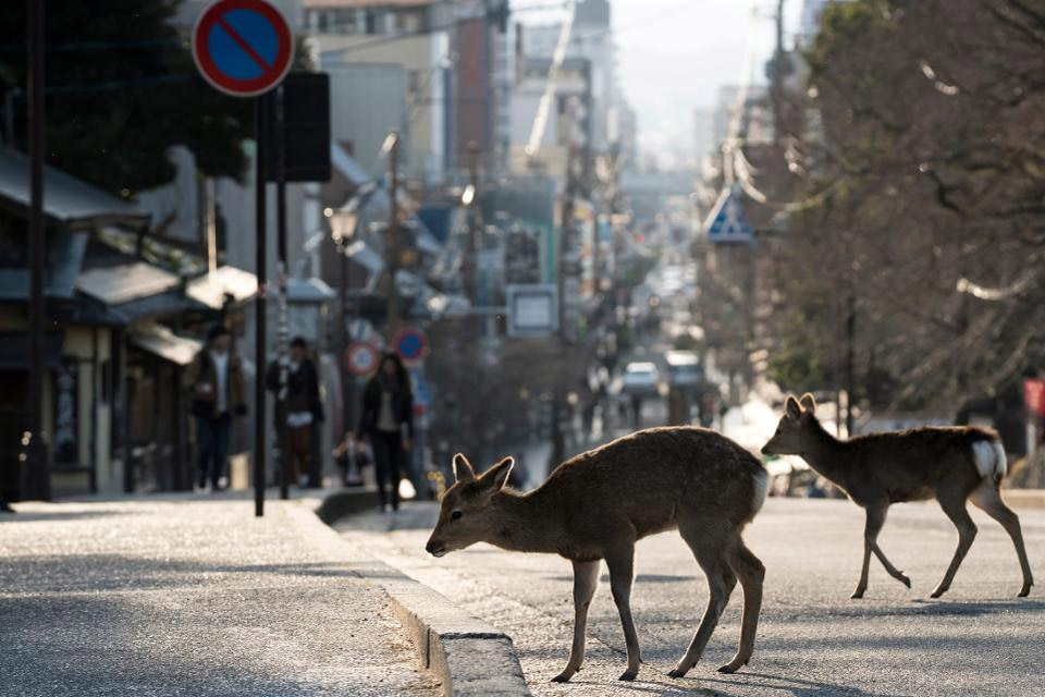 deer in city during coronavirus