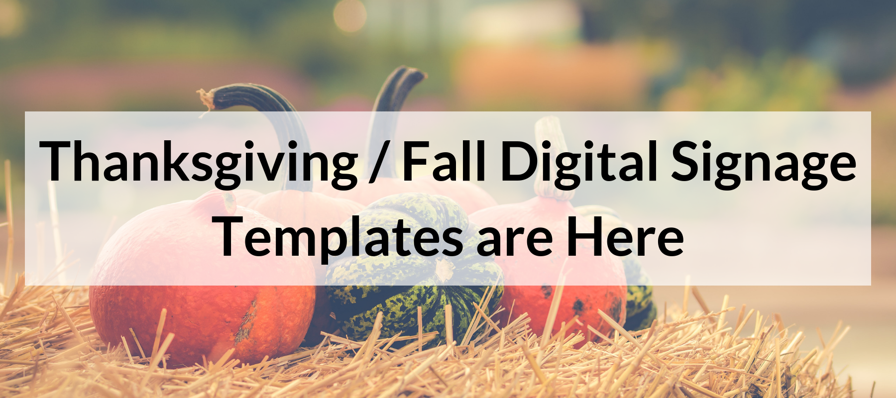 Thanksgiving - Fall Digital Signage Templates are Here